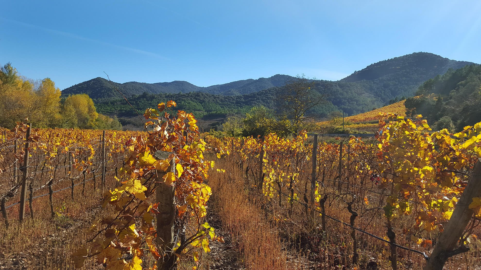 The Priorat vineyards landscape Montsant Terra Alta