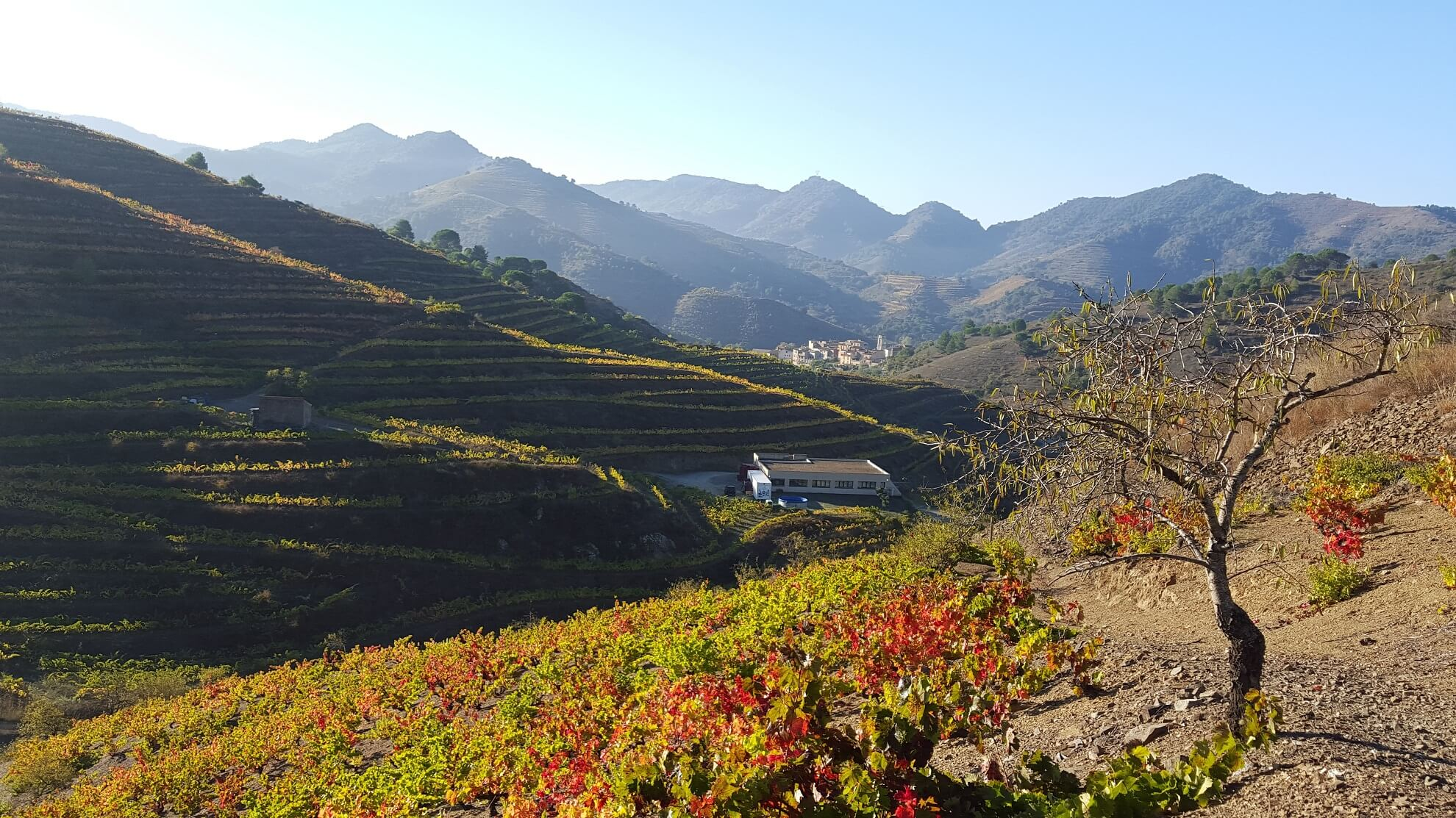 Porrera vineyards in the morning